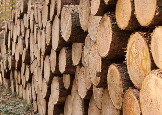 Praxisbeispiele für Holz als alternativer Brennstoff in BHKWs